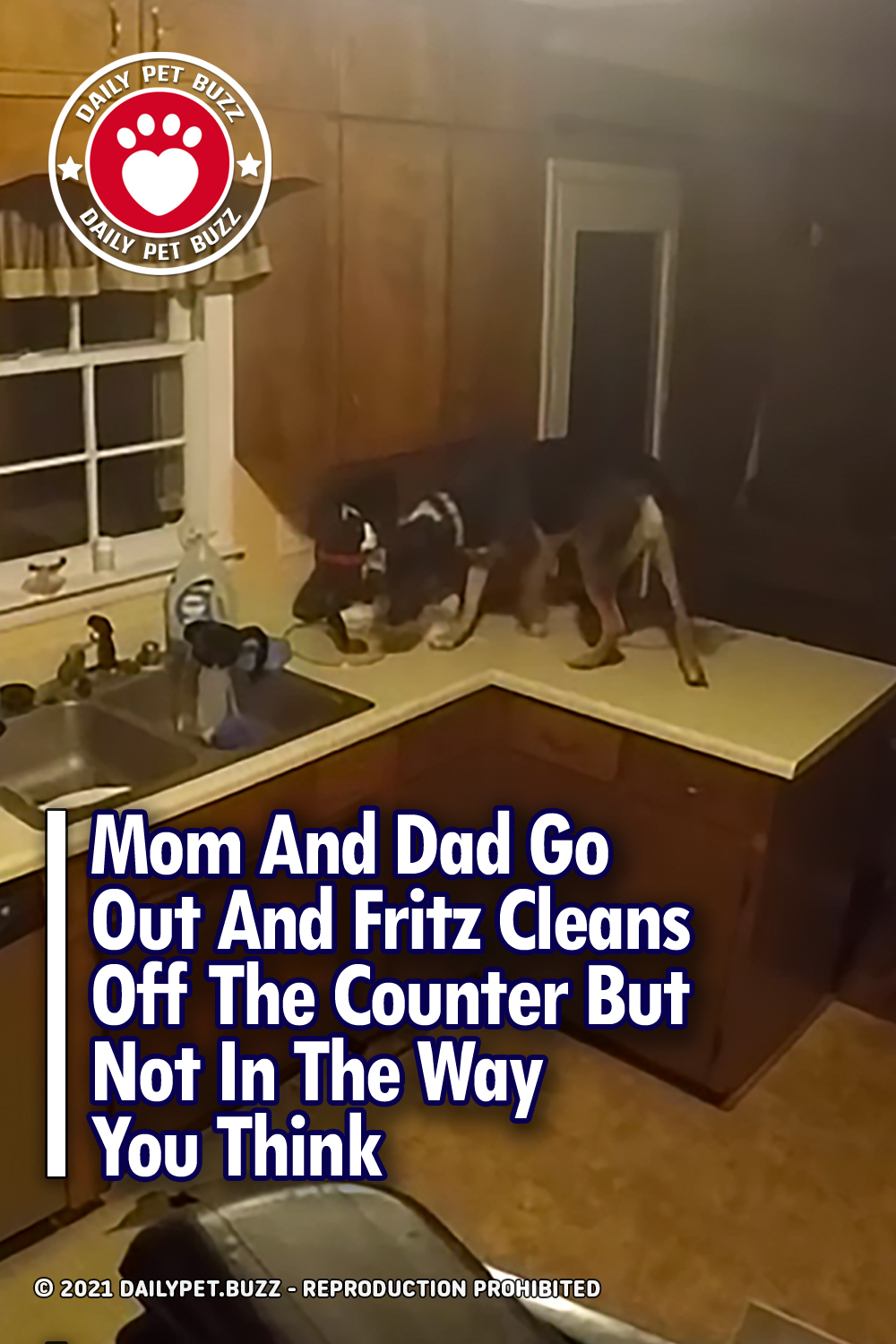 Mom And Dad Go Out And Fritz Cleans Off The Counter But Not In The Way You Think