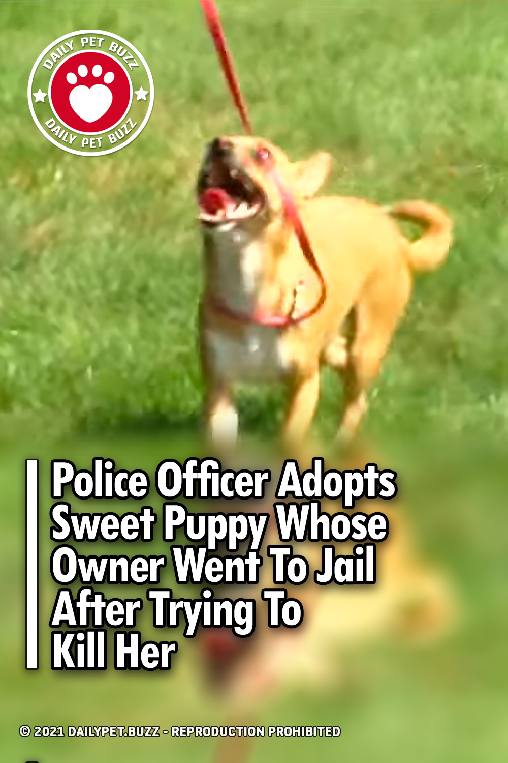 Police Officer Adopts Sweet Puppy Whose Owner Went To Jail After Trying To Kill Her