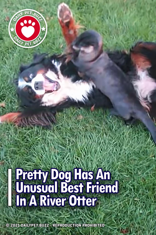 Pretty Dog Has An Unusual Best Friend In A River Otter