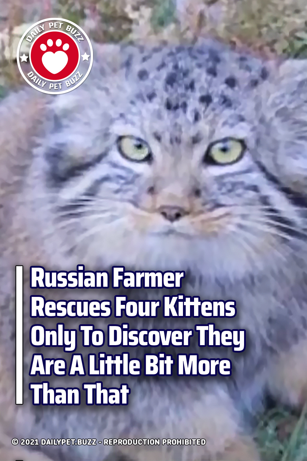 Russian Farmer Rescues Four Kittens Only To Discover They Are A Little Bit More Than That
