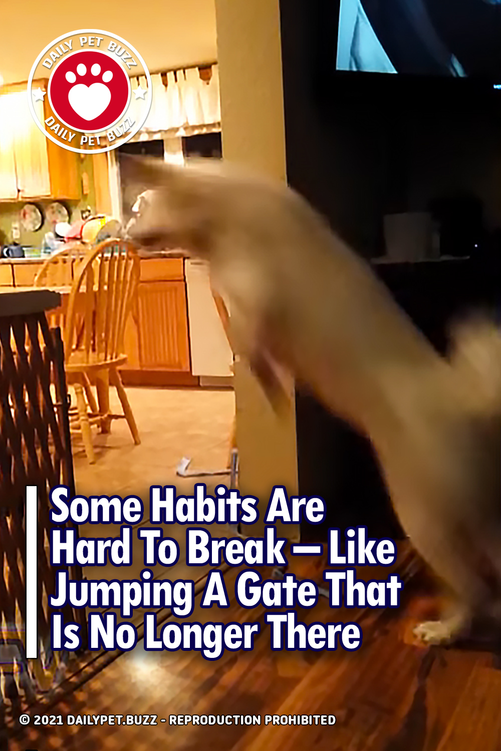 Some Habits Are Hard To Break – Like Jumping A Gate That Is No Longer There