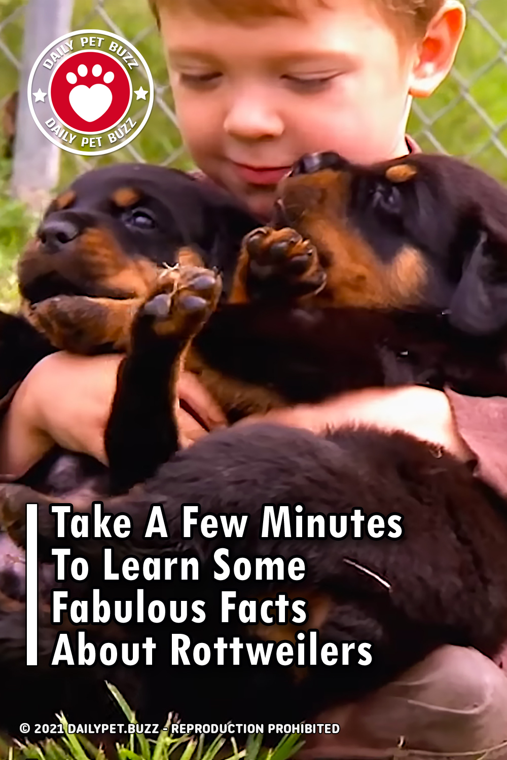 Take A Few Minutes To Learn Some Fabulous Facts About Rottweilers