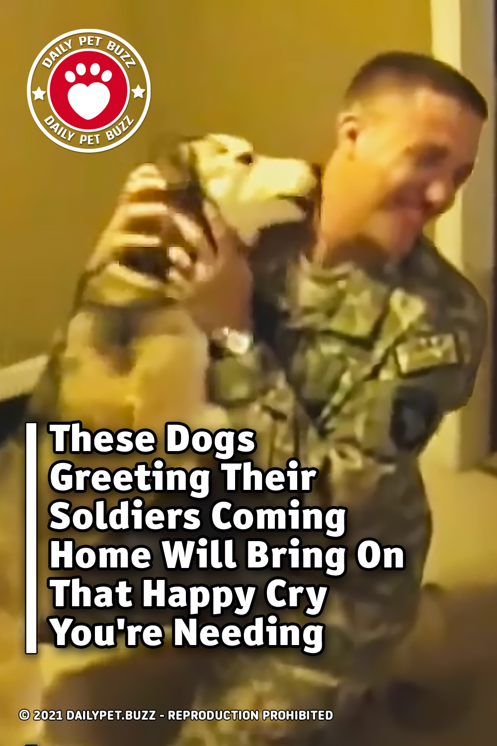 These Dogs Greeting Their Soldiers Coming Home Will Bring On That Happy Cry You\'re Needing