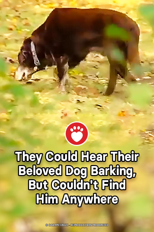 They Could Hear Their Beloved Dog Barking, But Couldn\'t Find Him Anywhere