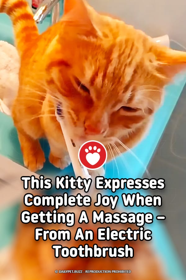 This Kitty Expresses Complete Joy When Getting A Massage – From An Electric Toothbrush