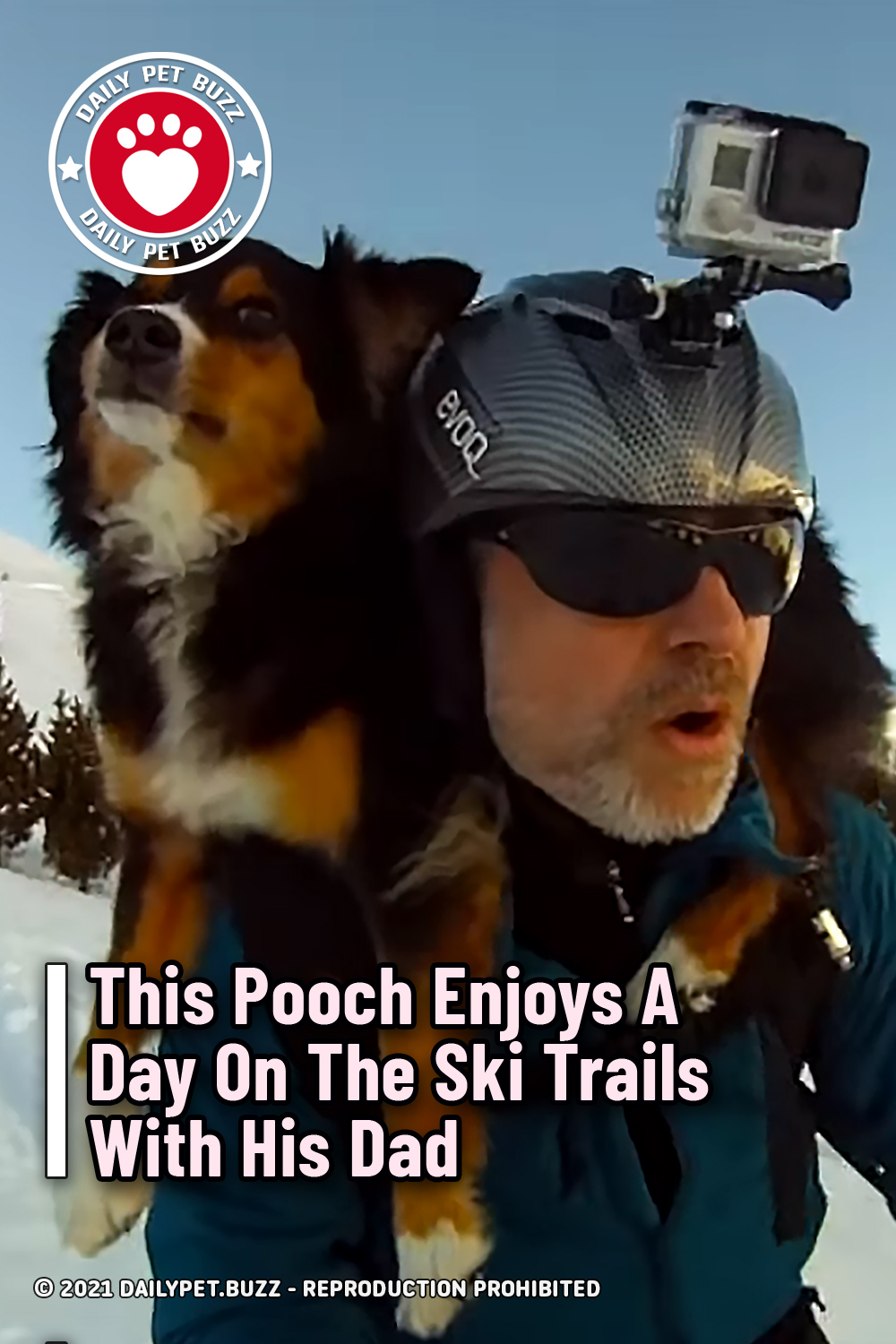 This Pooch Enjoys A Day On The Ski Trails With His Dad