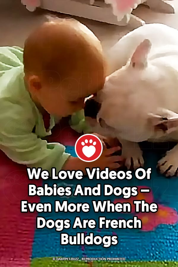 We Love Videos Of Babies And Dogs – Even More When The Dogs Are French Bulldogs