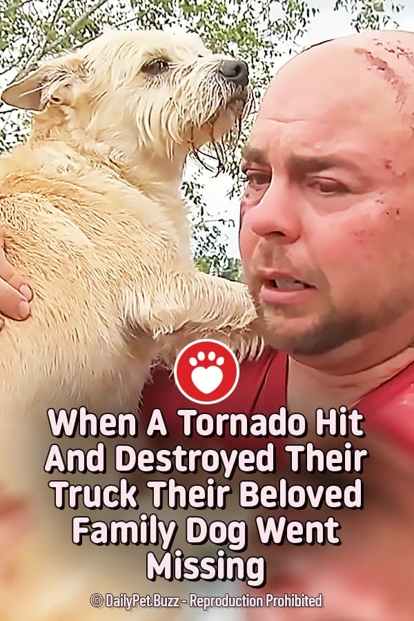 When A Tornado Hit And Destroyed Their Truck Their Beloved Family Dog Went Missing