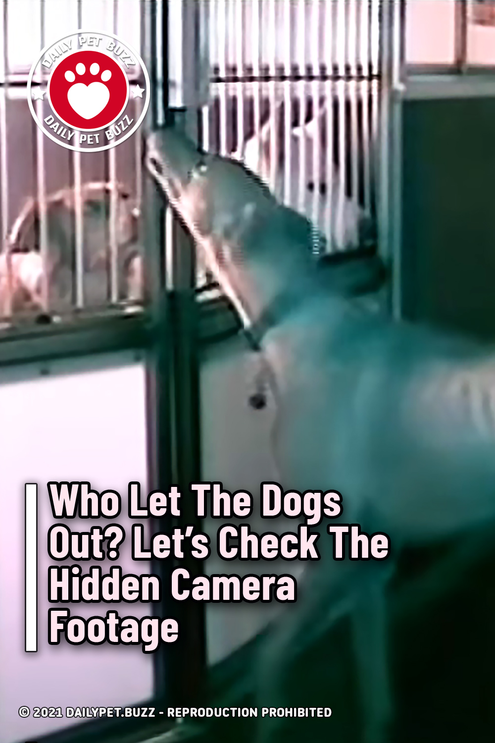 Who Let The Dogs Out? Let\'s Check The Hidden Camera Footage