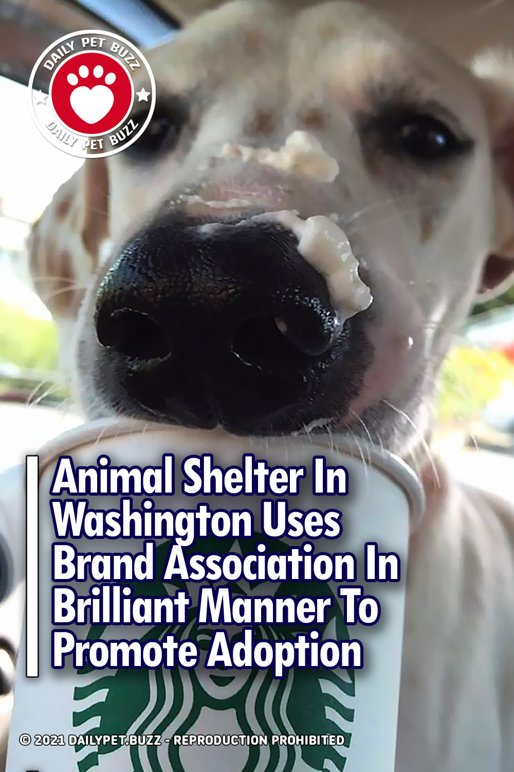 Animal Shelter In Washington Uses Brand Association In Brilliant Manner To Promote Adoption