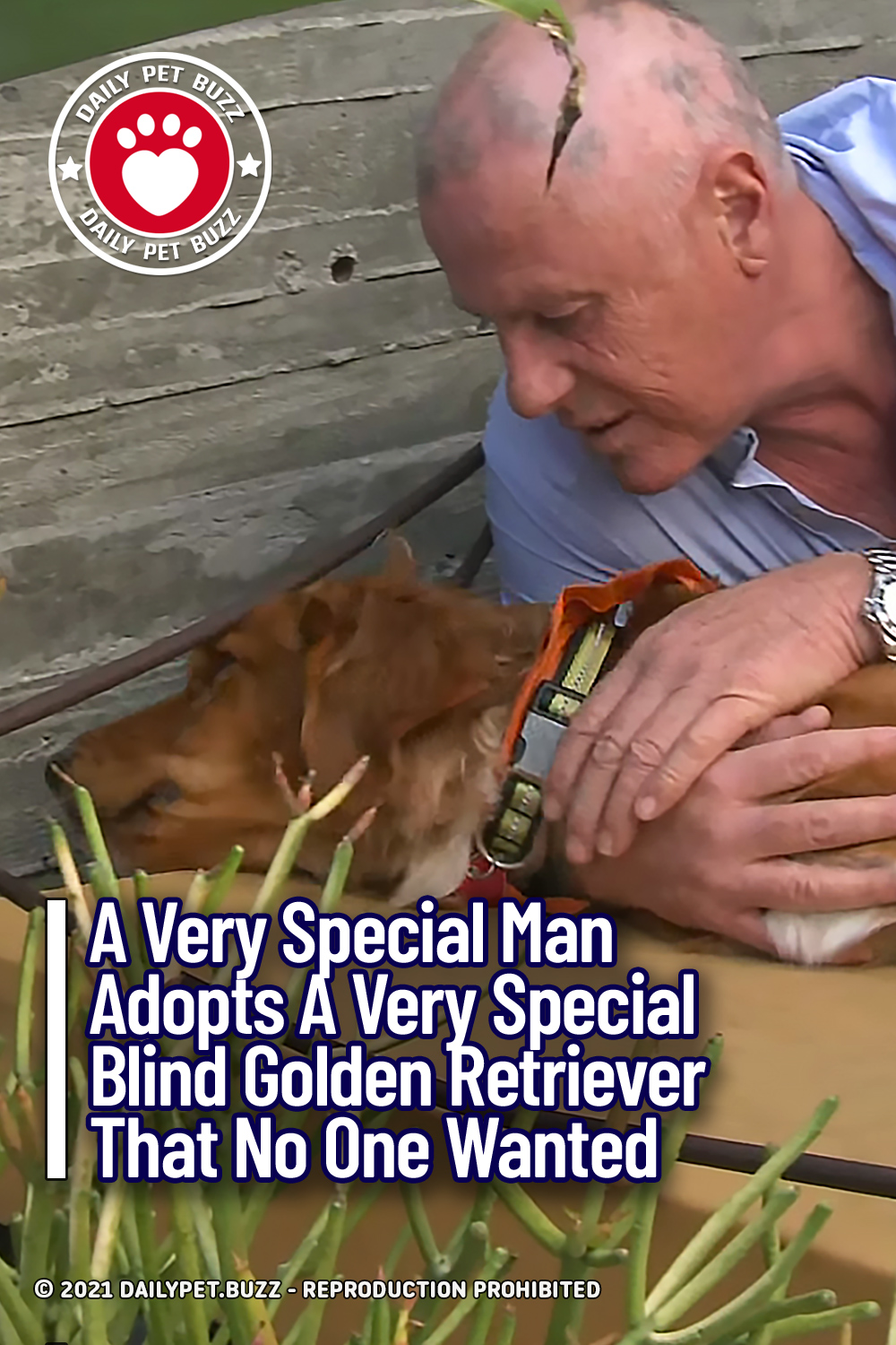 A Very Special Man Adopts A Very Special Blind Golden Retriever That No One Wanted