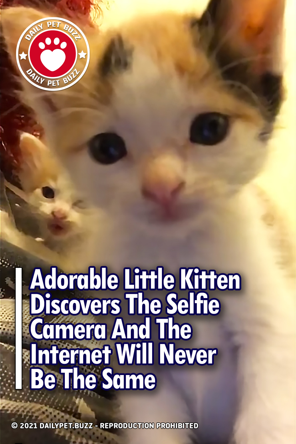 Adorable Little Kitten Discovers The Selfie Camera And The Internet Will Never Be The Same