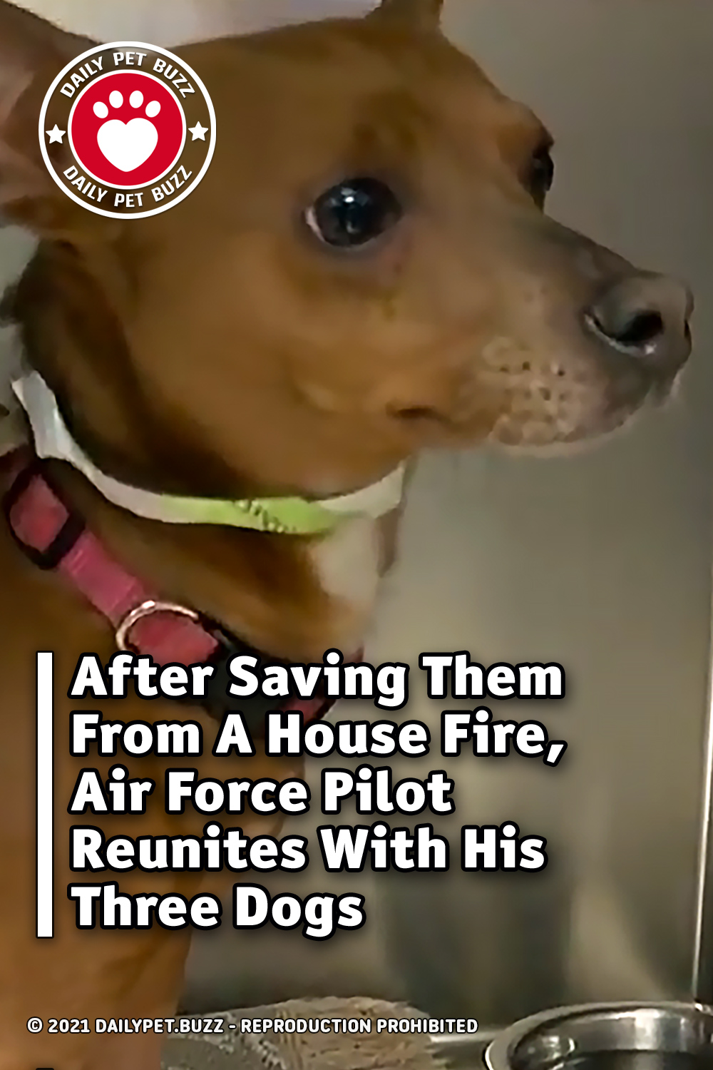 After Saving Them From A House Fire, Air Force Pilot Reunites With His Three Dogs