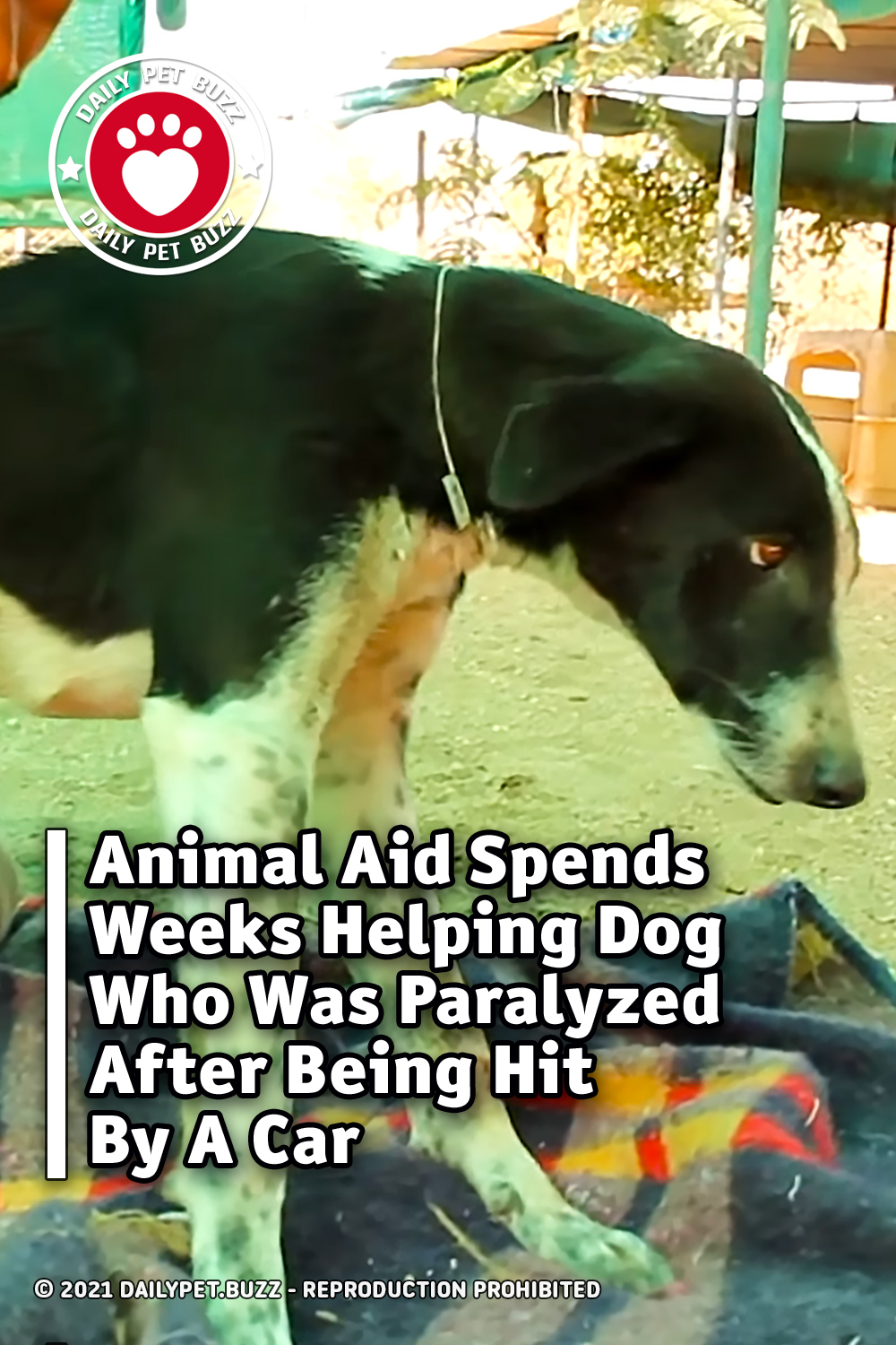 Animal Aid Spends Weeks Helping Dog Who Was Paralyzed After Being Hit By A Car