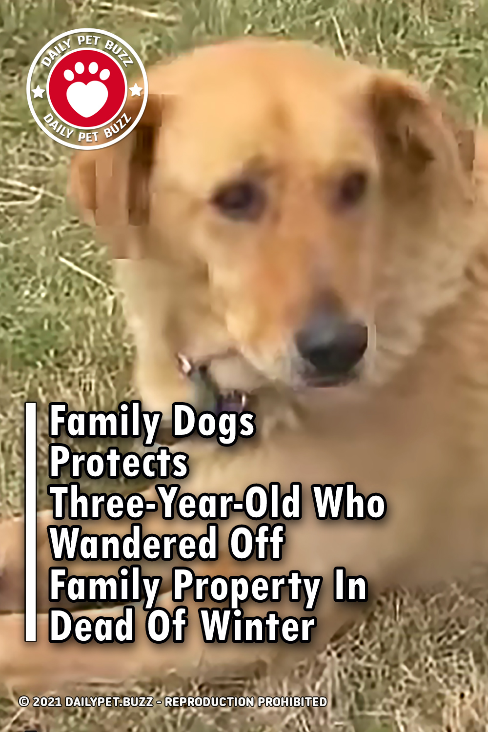 Family Dogs Protects Three-Year-Old Who Wandered Off Family Property In Dead Of Winter