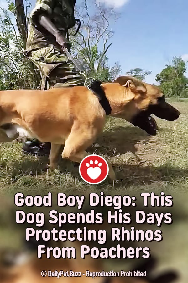 Good Boy Diego: This Dog Spends His Days Protecting Rhinos From Poachers