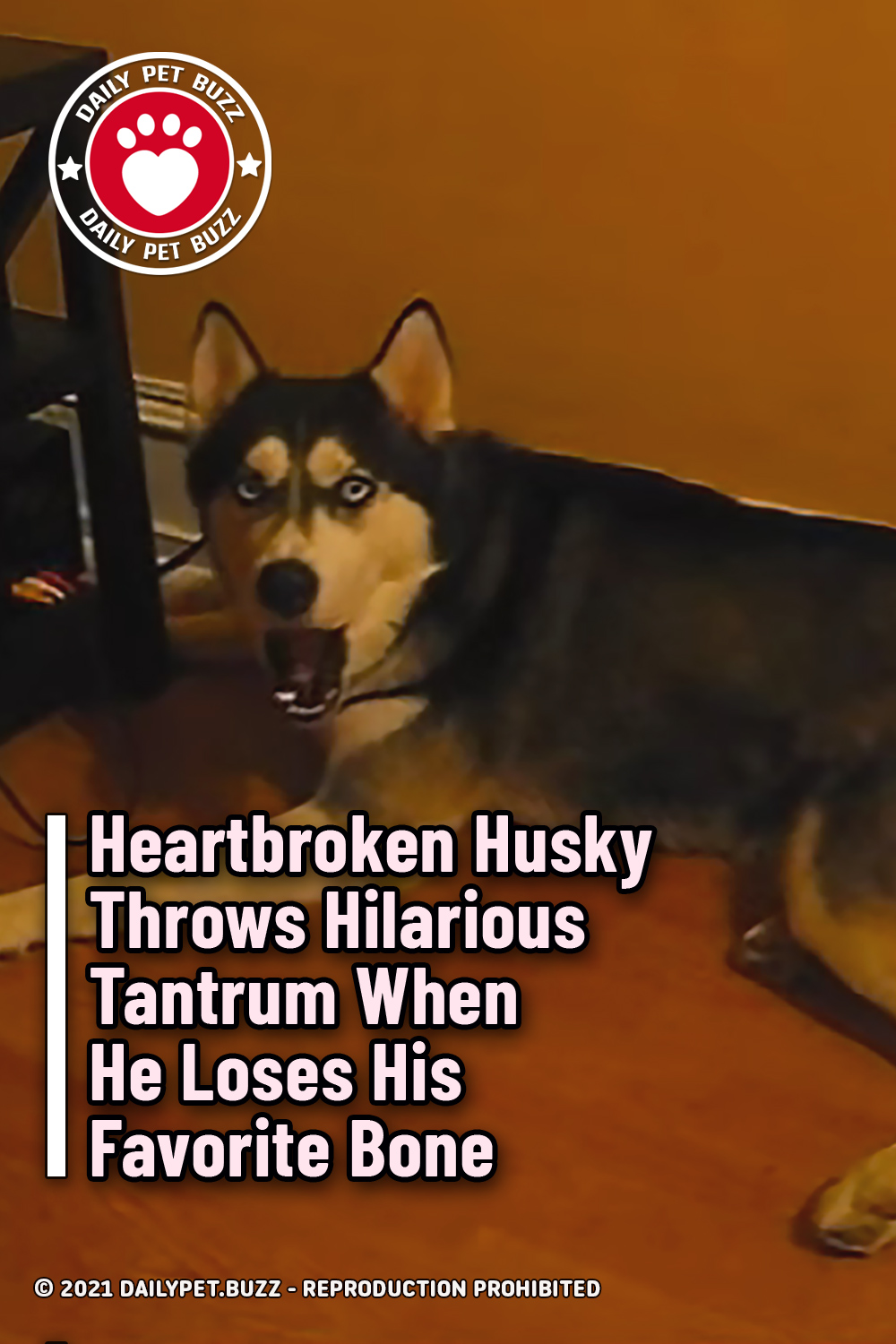 Heartbroken Husky Throws Hilarious Tantrum When He Loses His Favorite Bone