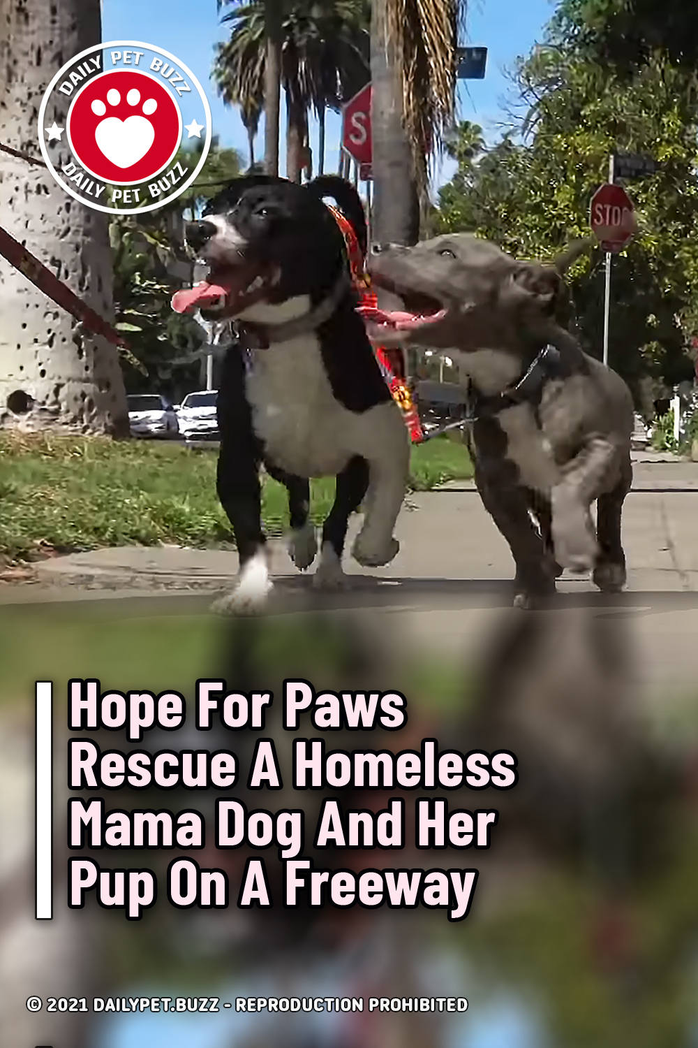 Hope For Paws Rescue A Homeless Mama Dog And Her Pup On A Freeway