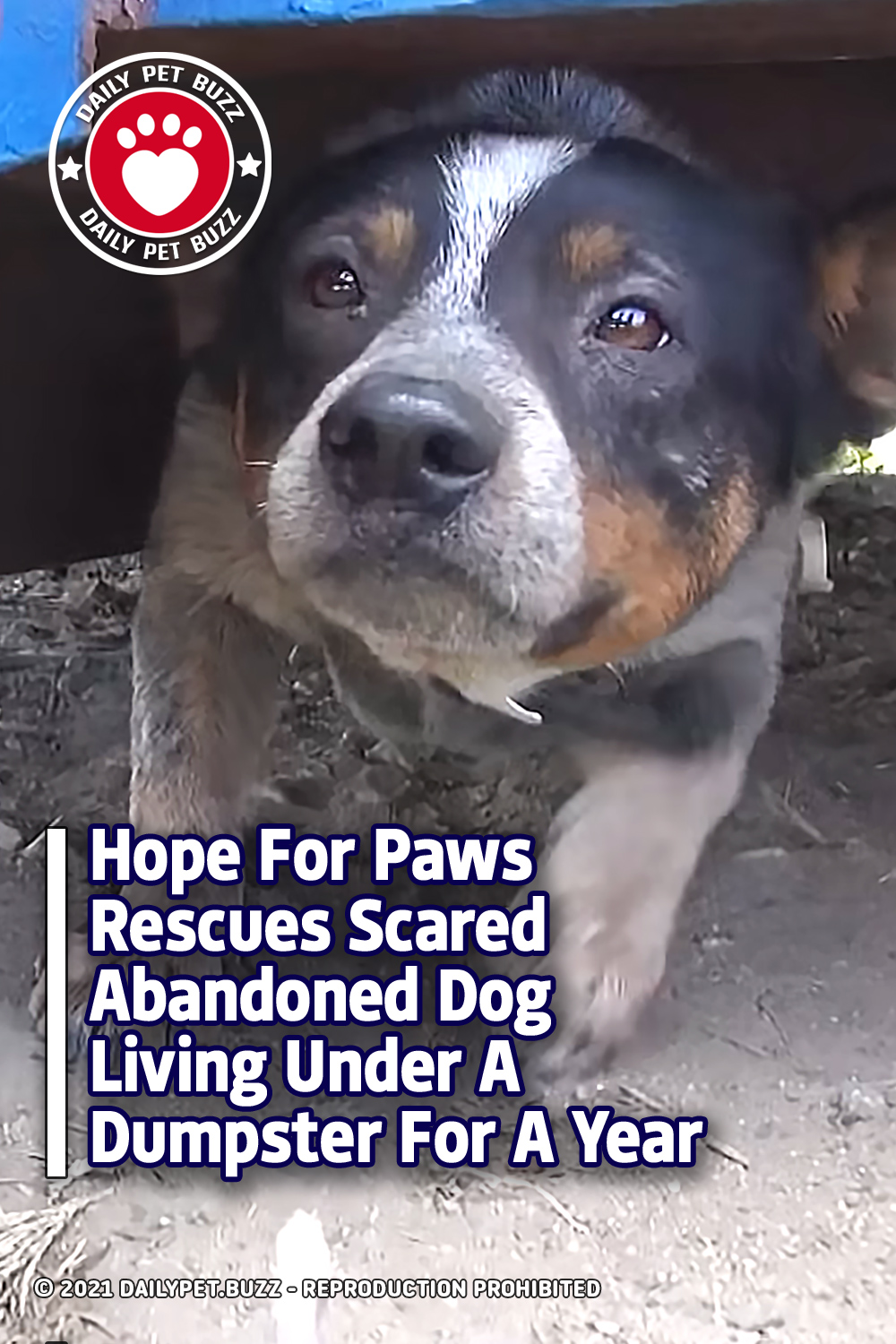 Hope For Paws Rescues Scared Abandoned Dog Living Under A Dumpster For A Year