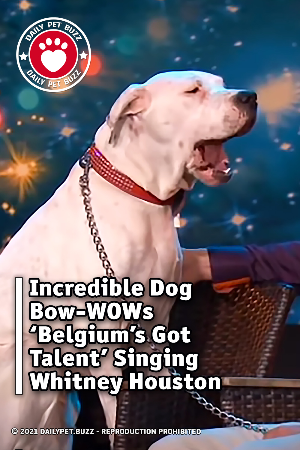 Incredible Dog Bow-WOWs \'Belgium\'s Got Talent\' Singing Whitney Houston