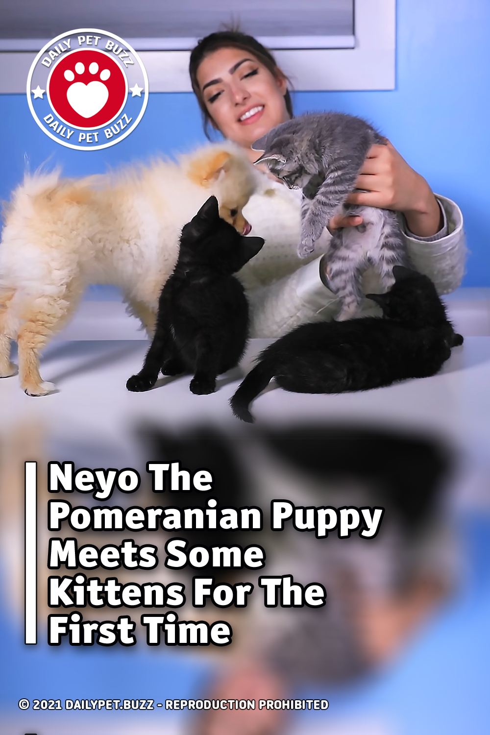 Neyo The Pomeranian Puppy Meets Some Kittens For The First Time