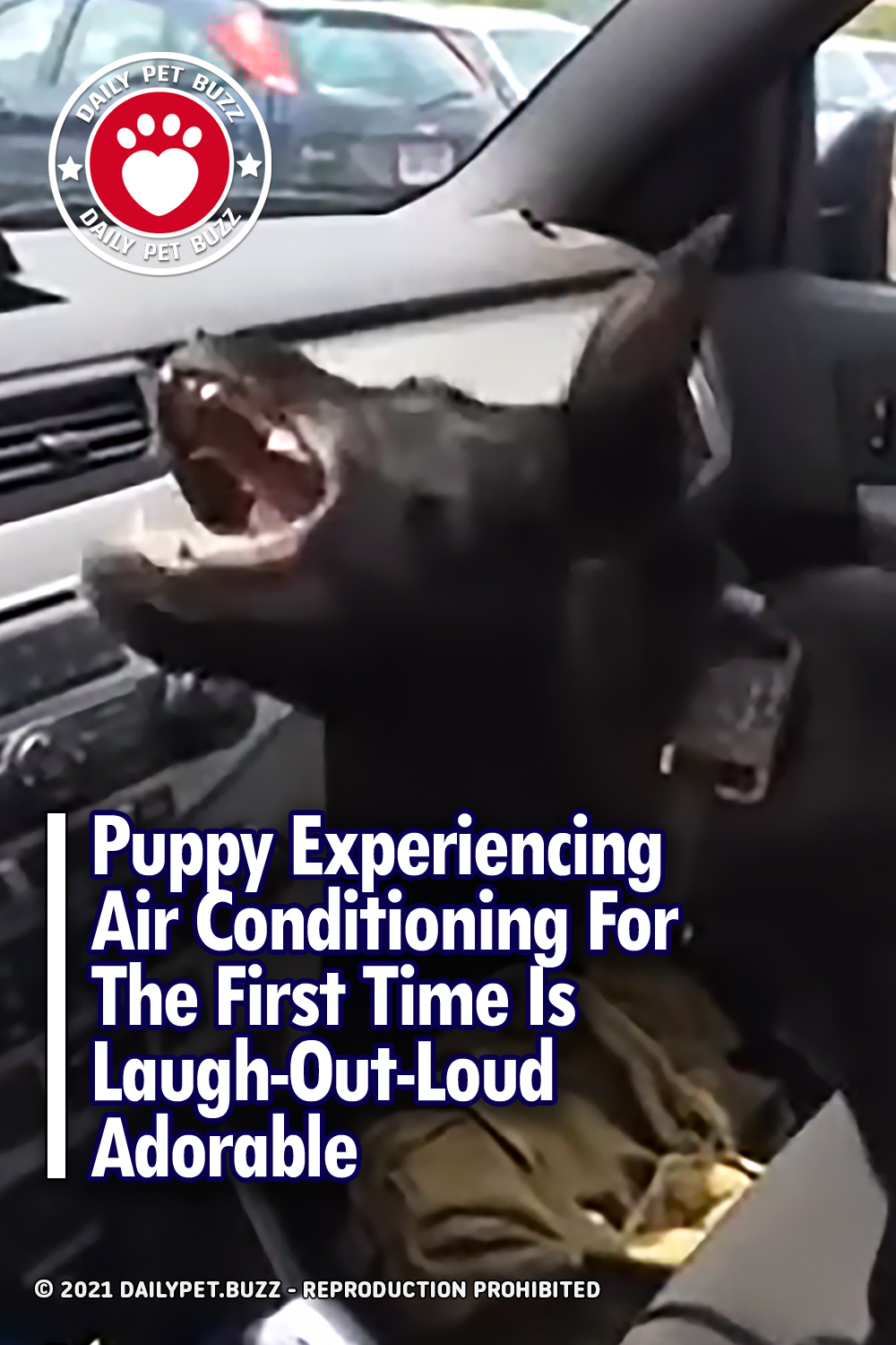 Puppy Experiencing Air Conditioning For The First Time Is Laugh-Out-Loud Adorable