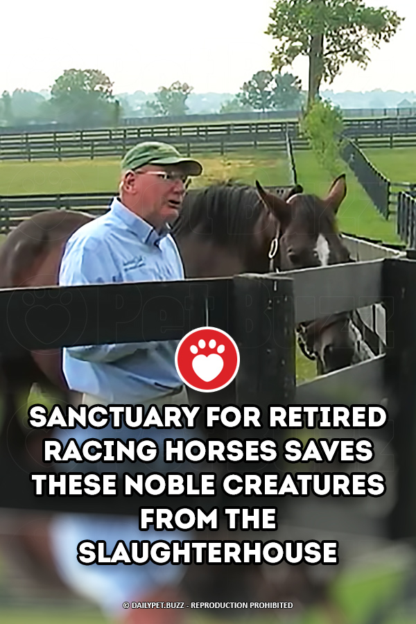 Sanctuary For Retired Racing Horses Saves These Noble Creatures From The Slaughterhouse
