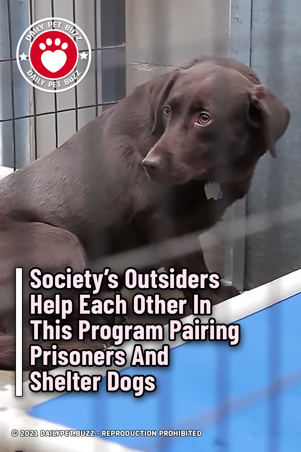 Society\'s Outsiders Help Each Other In This Program Pairing Prisoners And Shelter Dogs