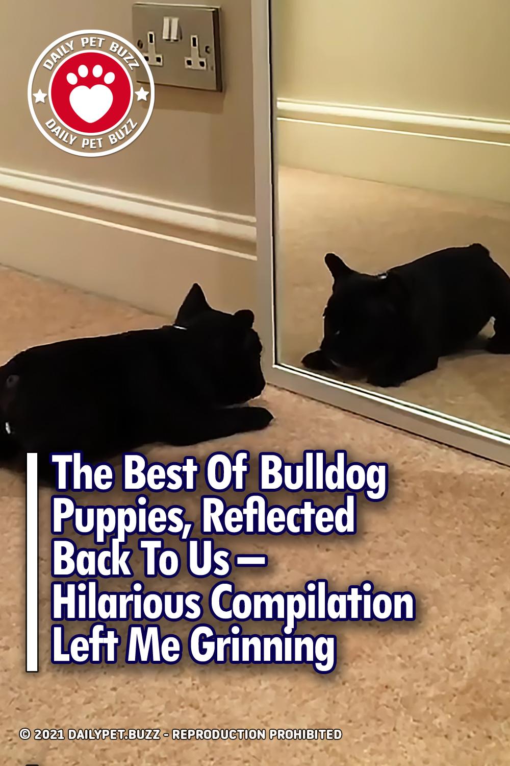 The Best Of Bulldog Puppies, Reflected Back To Us – Hilarious Compilation Left Me Grinning