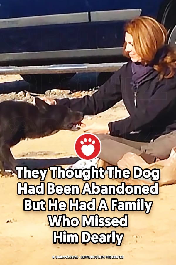 They Thought The Dog Had Been Abandoned But He Had A Family Who Missed Him Dearly