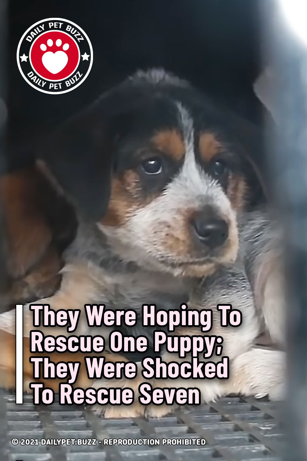 They Were Hoping To Rescue One Puppy; They Were Shocked To Rescue Seven