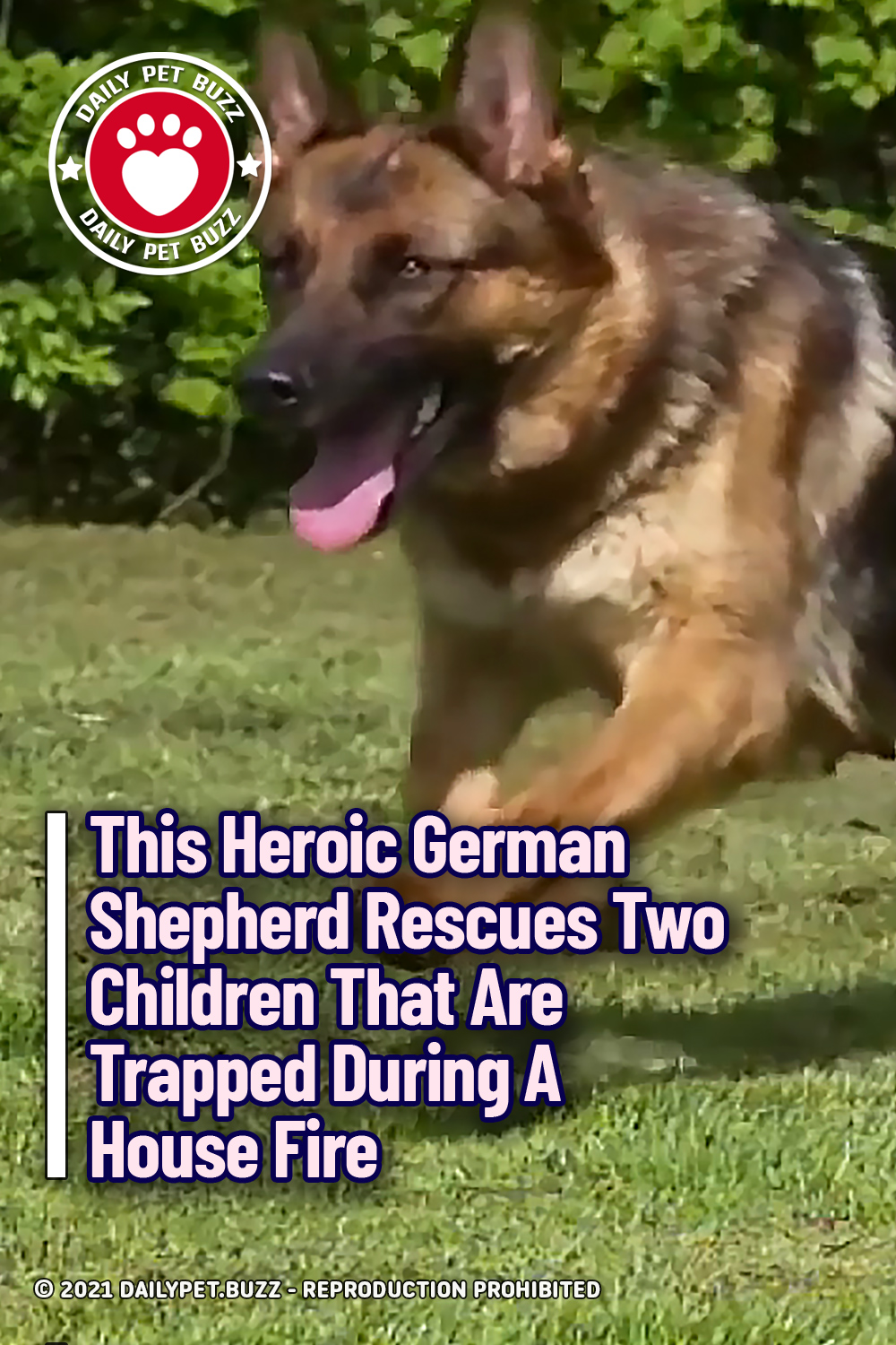 This Heroic German Shepherd Rescues Two Children That Are Trapped During A House Fire