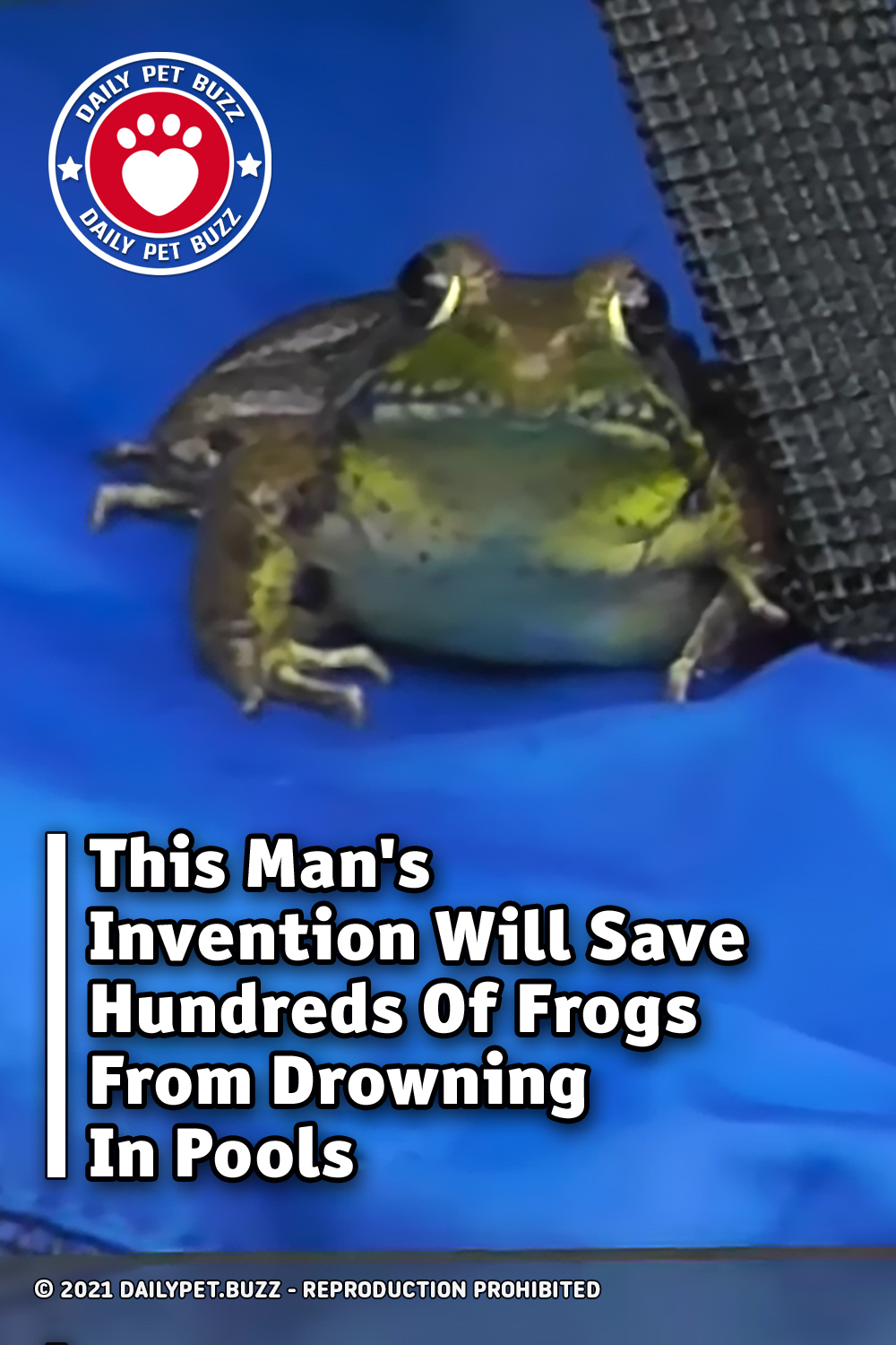 This Man\'s Invention Will Save Hundreds Of Frogs From Drowning In Pools