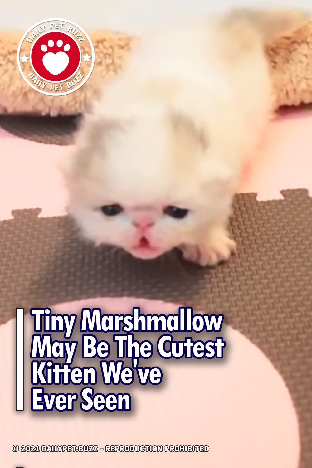 Tiny Marshmallow May Be The Cutest Kitten We\'ve Ever Seen
