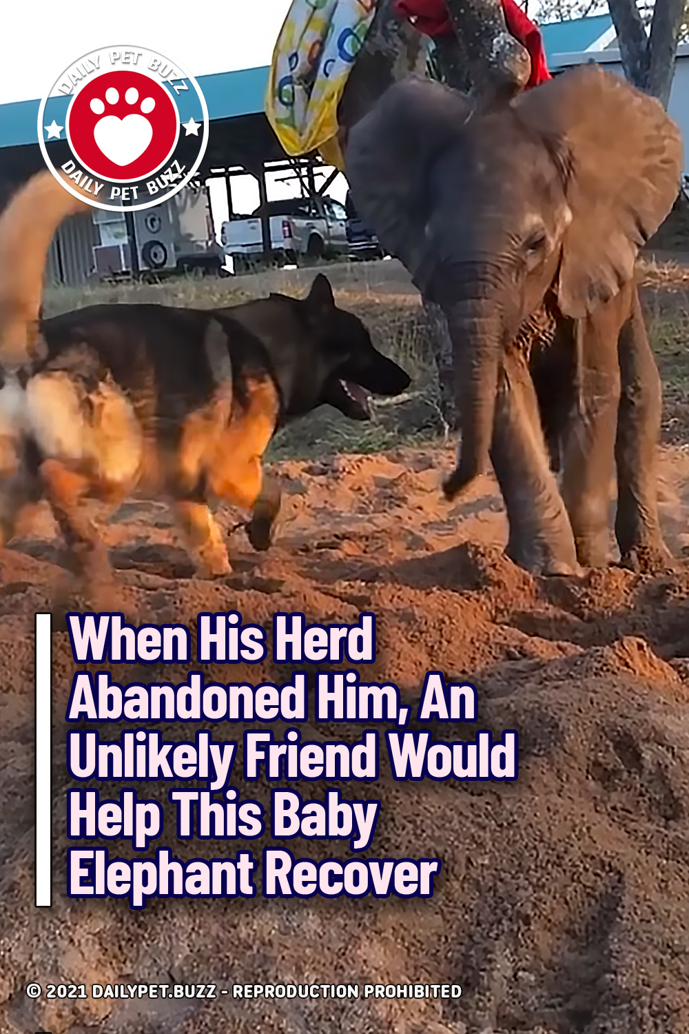 When His Herd Abandoned Him, An Unlikely Friend Would Help This Baby Elephant Recover