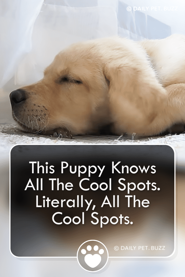 This Puppy Knows All The Cool Spots. Literally, All The Cool Spots.