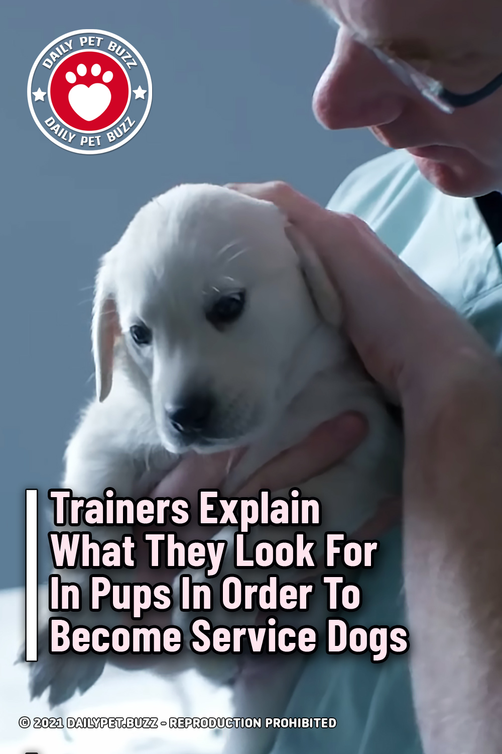 Trainers Explain What They Look For In Pups In Order To Become Service Dogs