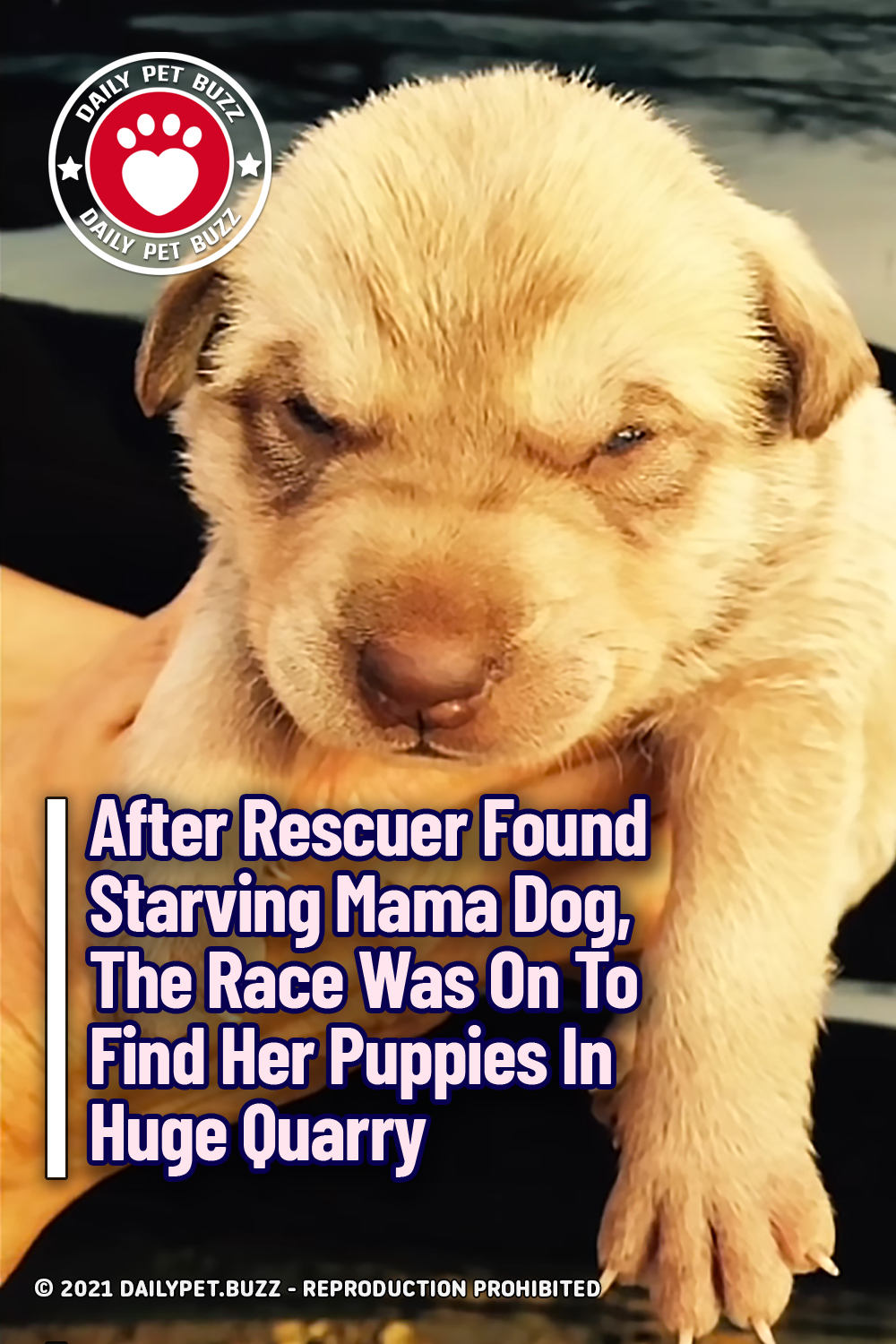 After Rescuer Found Starving Mama Dog, The Race Was On To Find Her Puppies In Huge Quarry