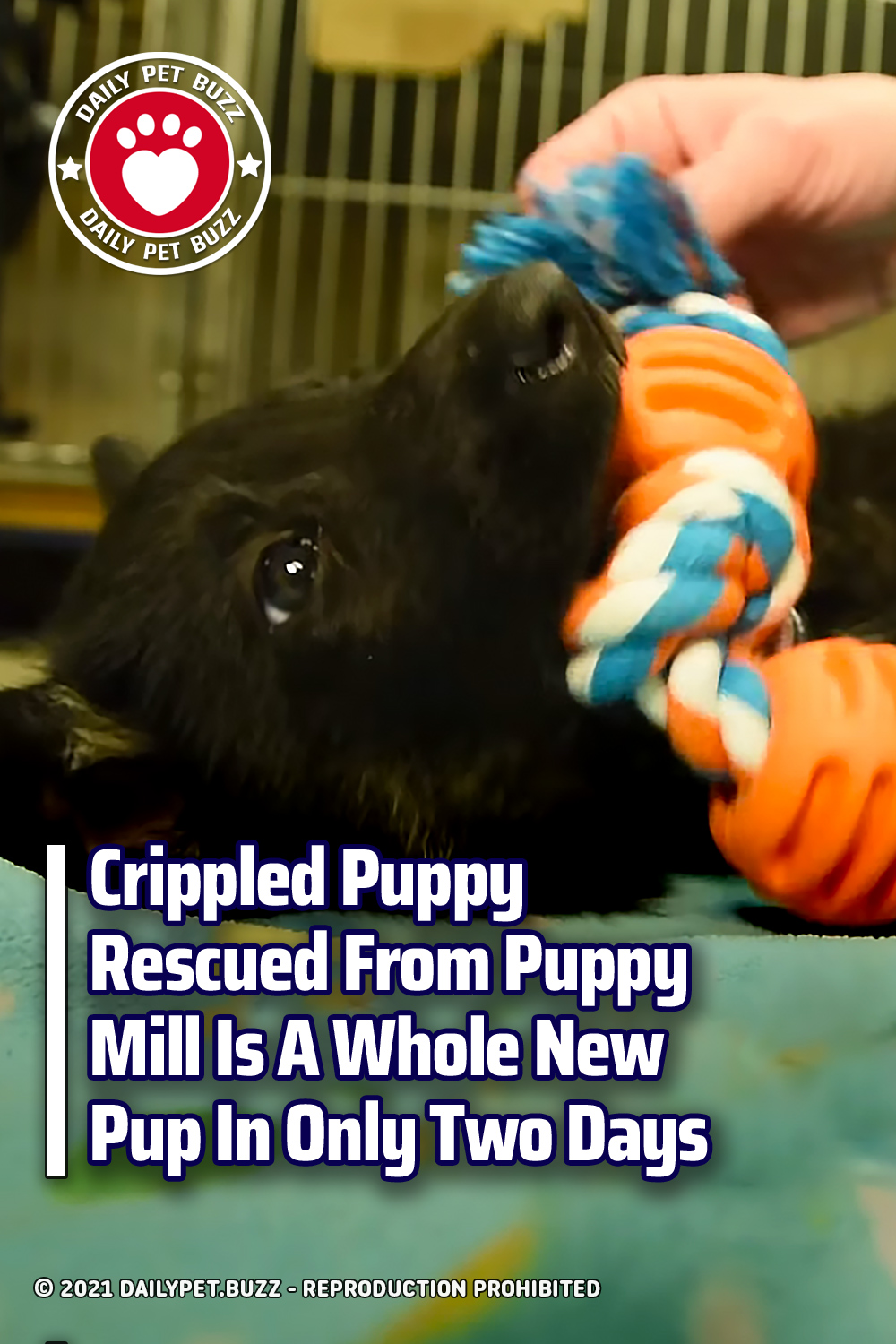 Crippled Puppy Rescued From Puppy Mill Is A Whole New Pup In Only Two Days