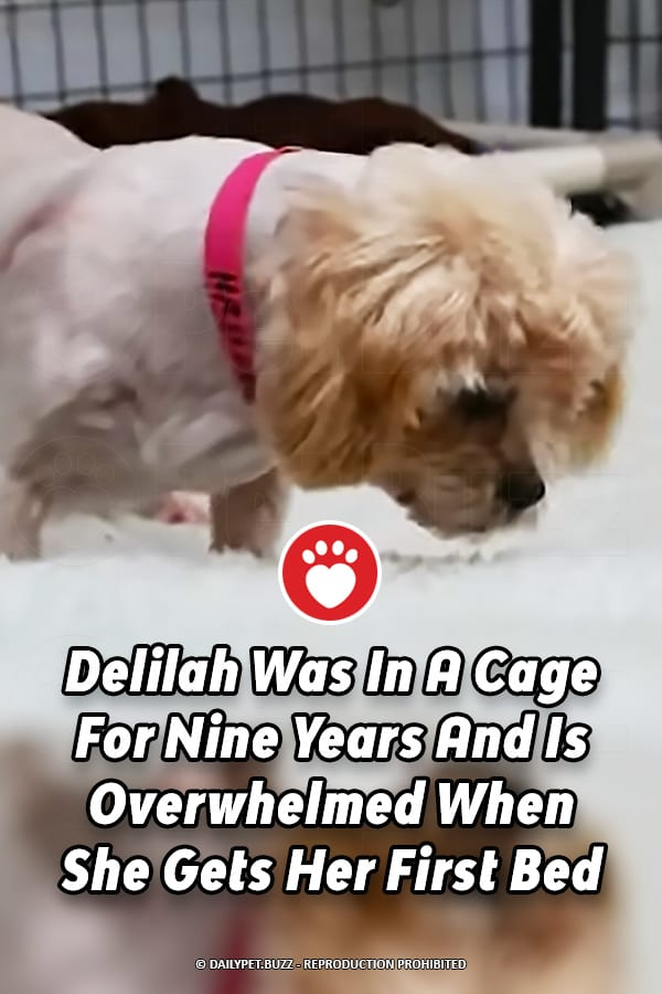 Delilah Was In A Cage For Nine Years And Is Overwhelmed When She Gets Her First Bed