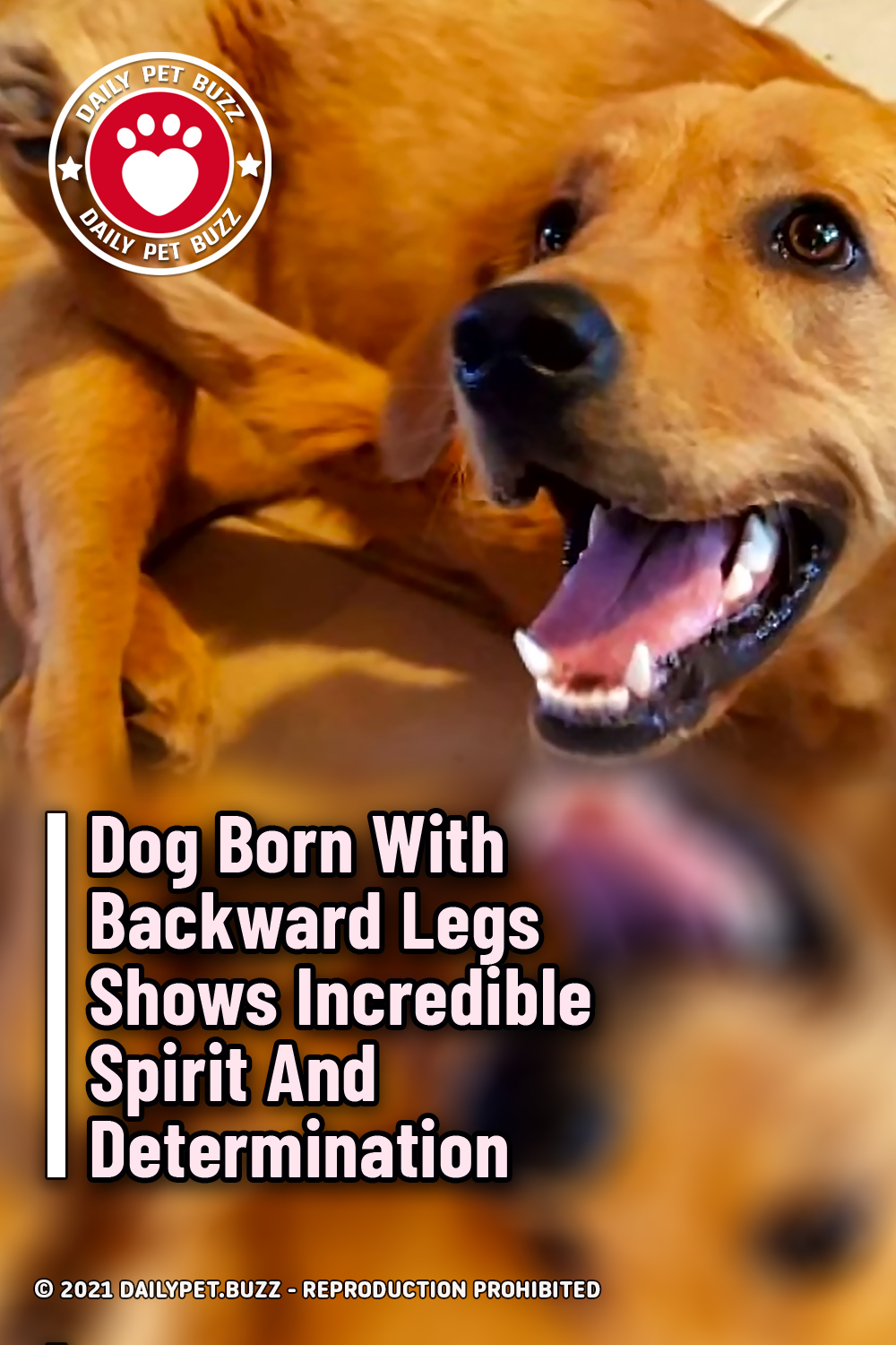 Dog Born With Backward Legs Shows Incredible Spirit And Determination
