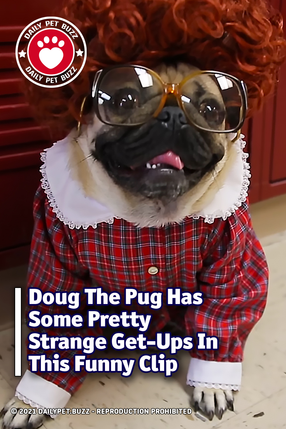 Doug The Pug Has Some Pretty Strange Get-Ups In This Funny Clip
