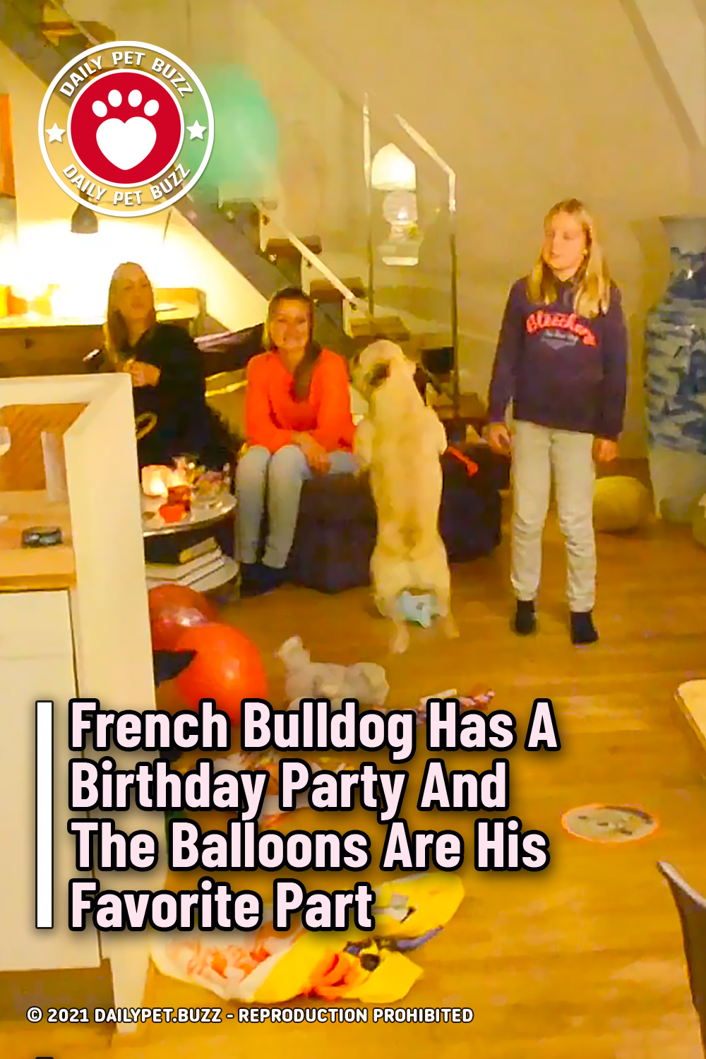 French Bulldog Has A Birthday Party And The Balloons Are His Favorite Part
