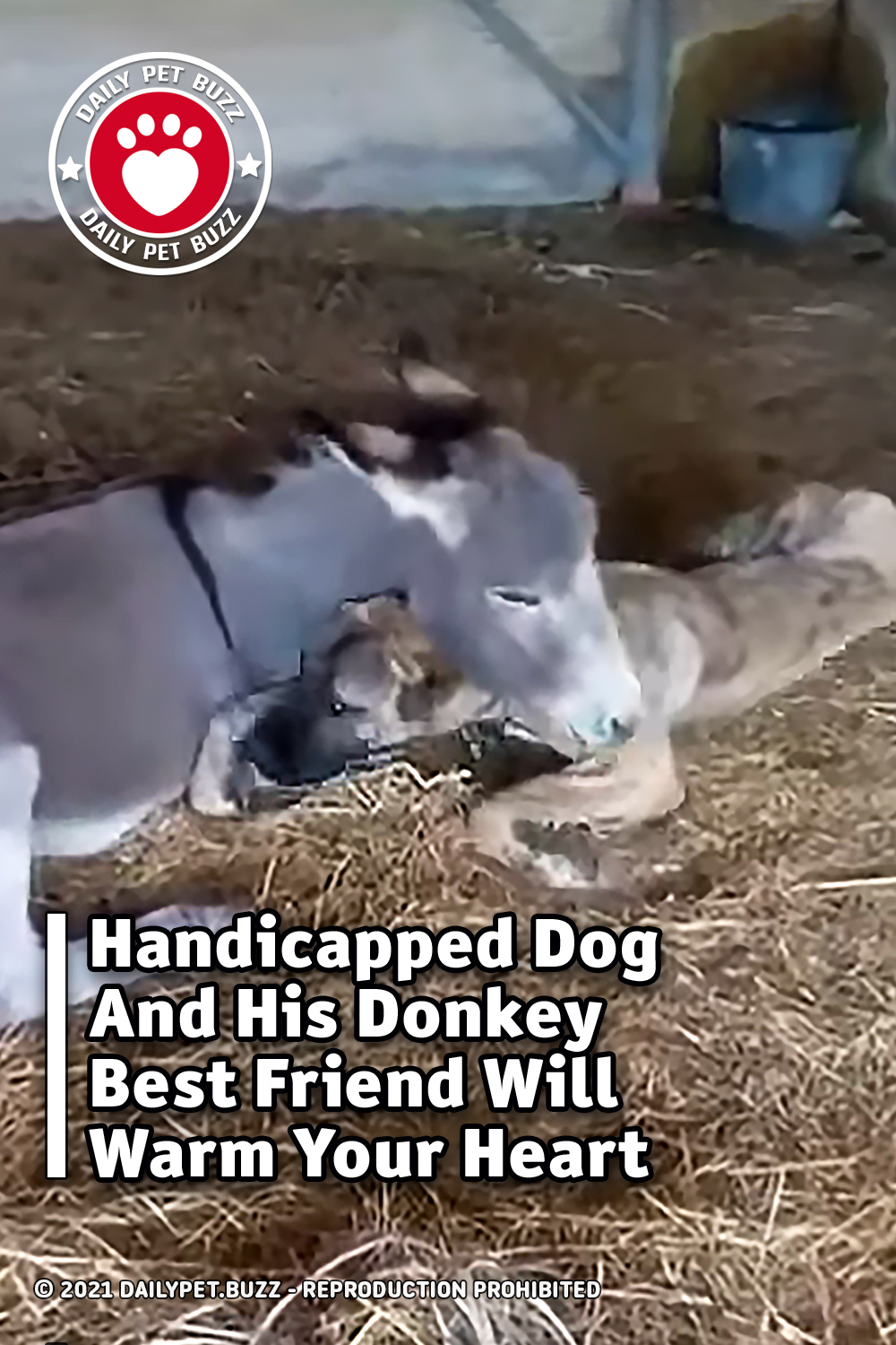 Handicapped Dog And His Donkey Best Friend Will Warm Your Heart