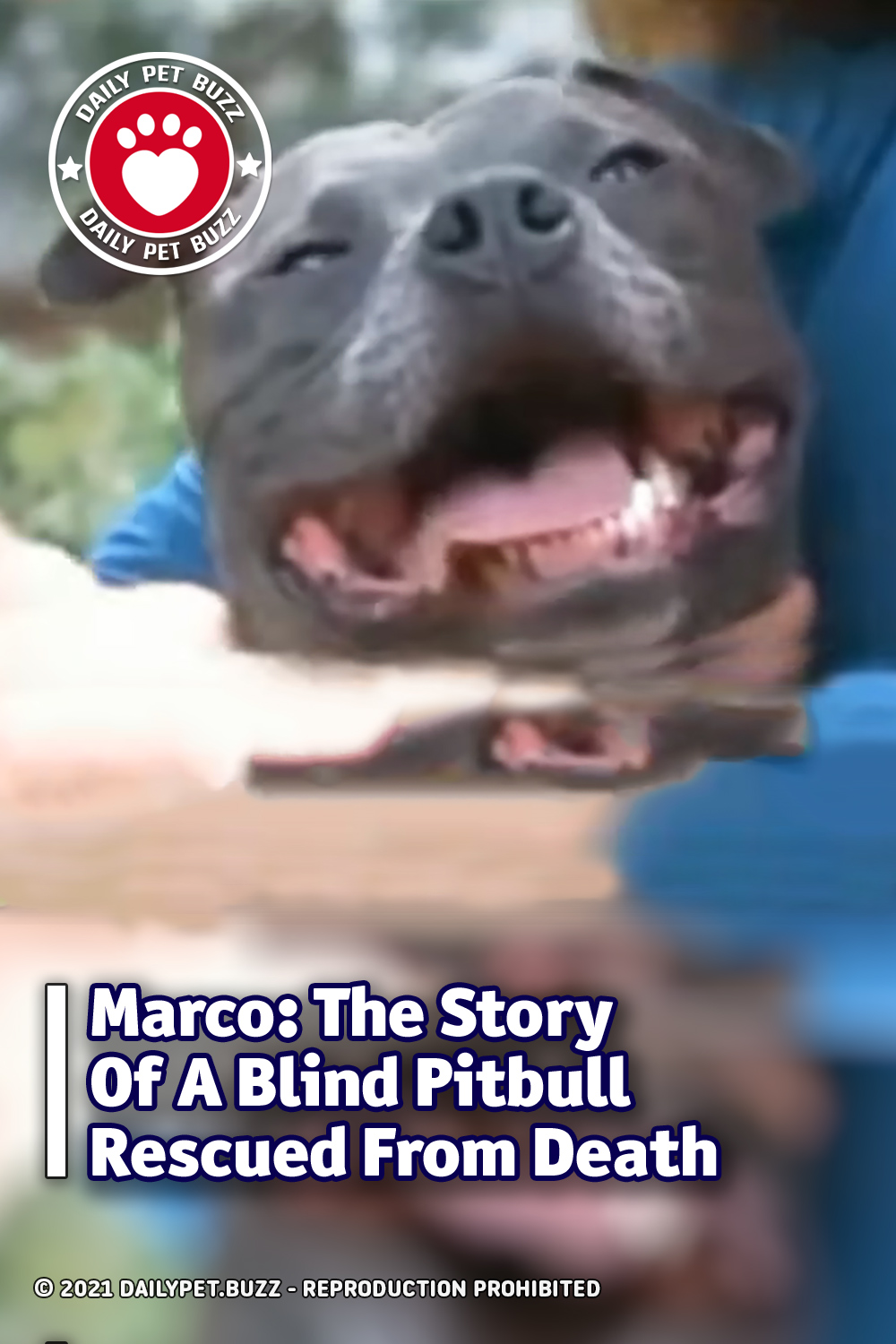 Marco: The Story Of A Blind Pitbull Rescued From Death