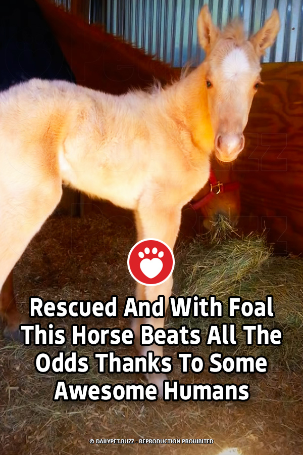 Rescued And With Foal This Horse Beats All The Odds Thanks To Some Awesome Humans