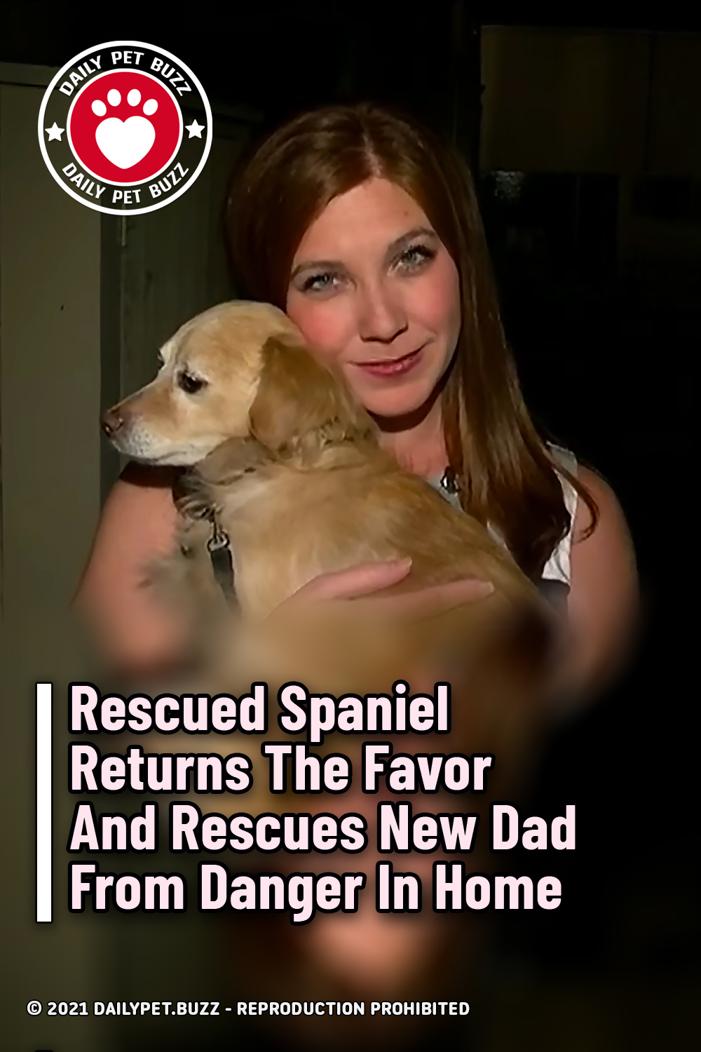 Rescued Spaniel Returns The Favor And Rescues New Dad From Danger In Home