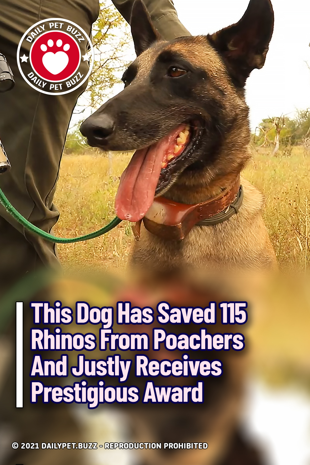 This Dog Has Saved 115 Rhinos From Poachers And Justly Receives Prestigious Award