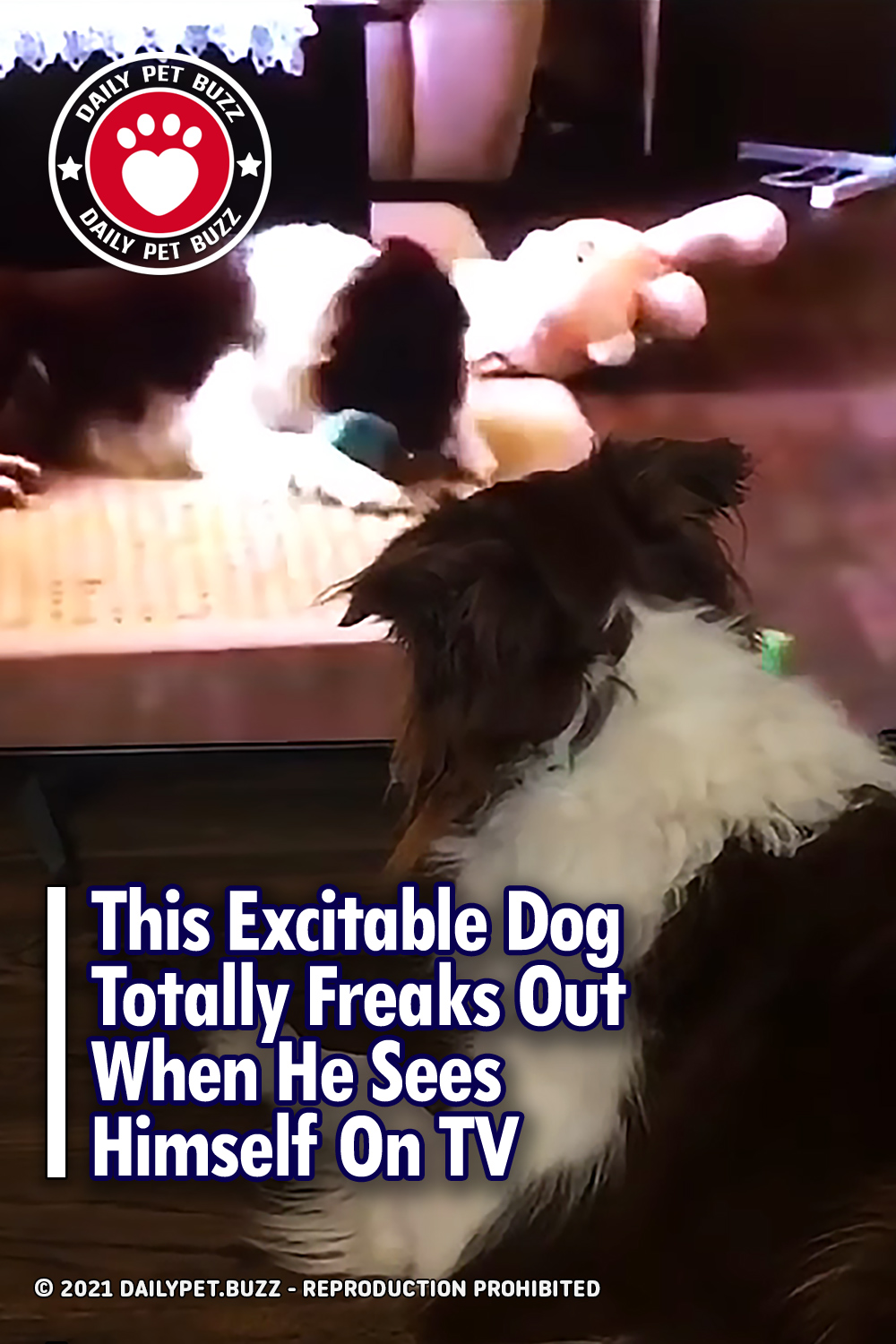 This Excitable Dog Totally Freaks Out When He Sees Himself On TV