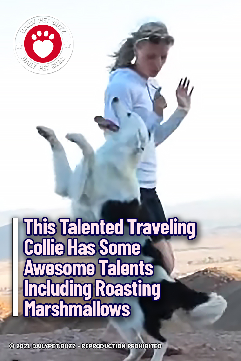This Talented Traveling Collie Has Some Awesome Talents Including Roasting Marshmallows